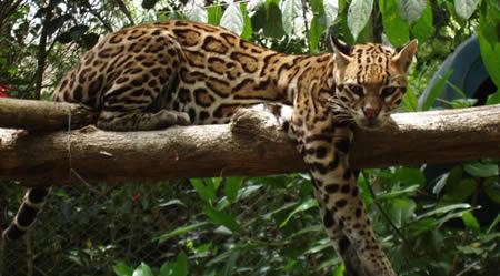 reserva de la biosfera de calakmul, campeche