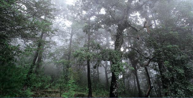 Parque Nacional Zoquiapan y Anexas, Estado de México