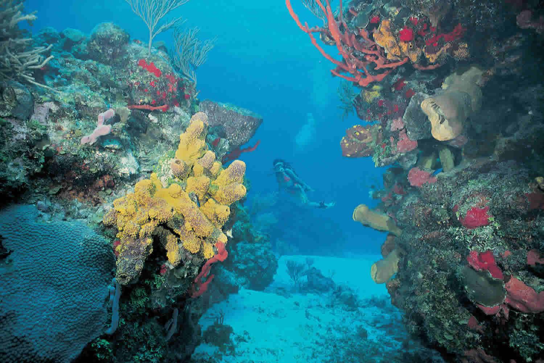 El Arrecife de Cancún