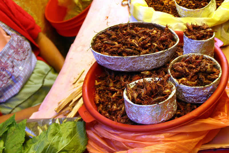 Gastronomía de Oaxaca