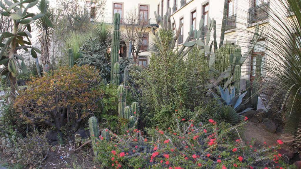 Jard n bot nico ciudad de m xico turimexico for Jardin botanico unam 2015