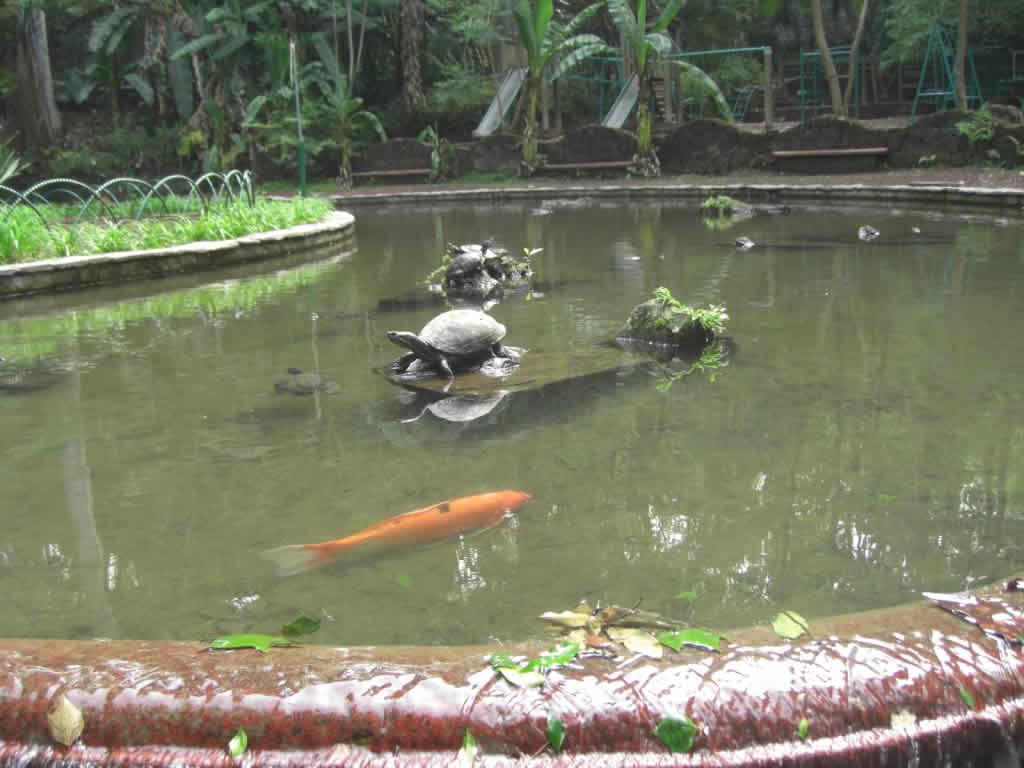Parque Los Tecajetes, Veracruz