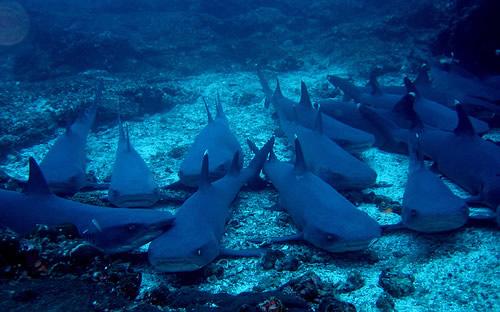 Isla Tiburón, Sonora
