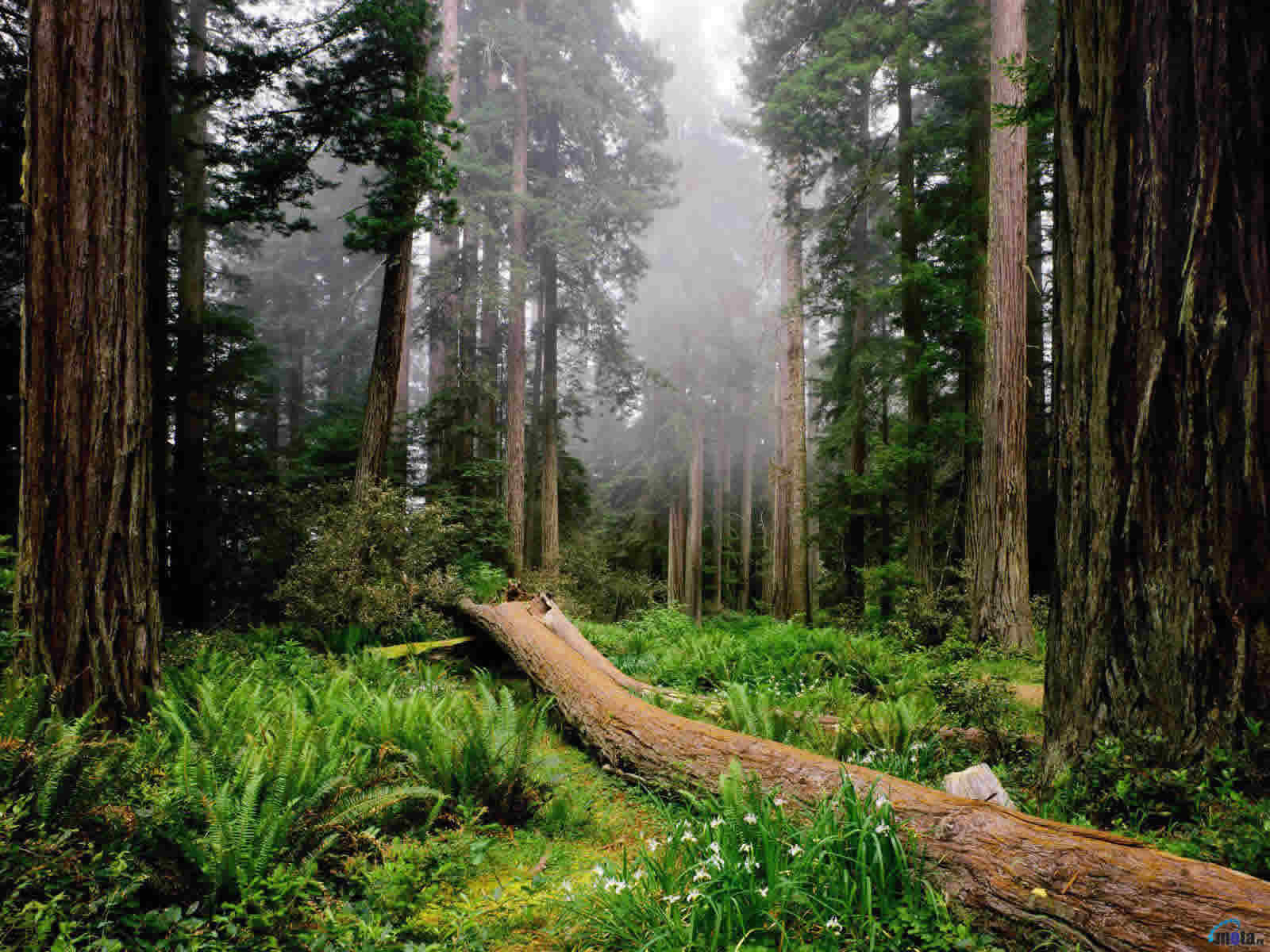 Los Bosques en México