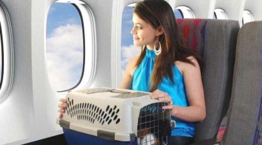 Condiciones para Volar con tu Mascota en la Cabina del Avión