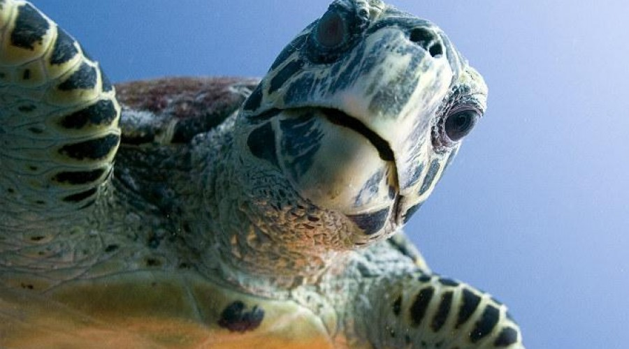 Conservación de Tortuga en Xel-Há