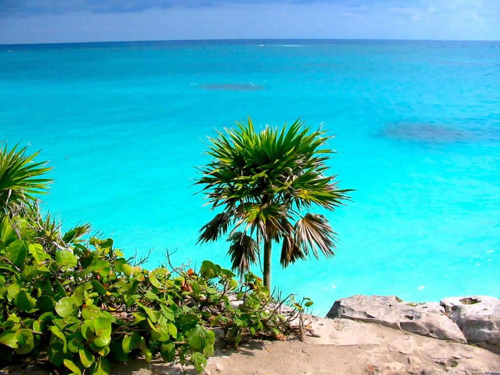 Playas y arrecifes en cozumel turimexico for En zacatecas hay playa
