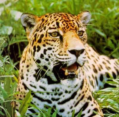 Fauna Maya