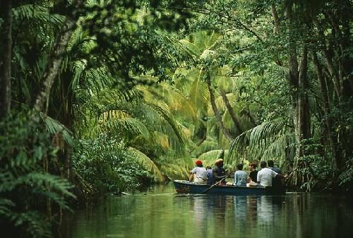 Selvas en México
