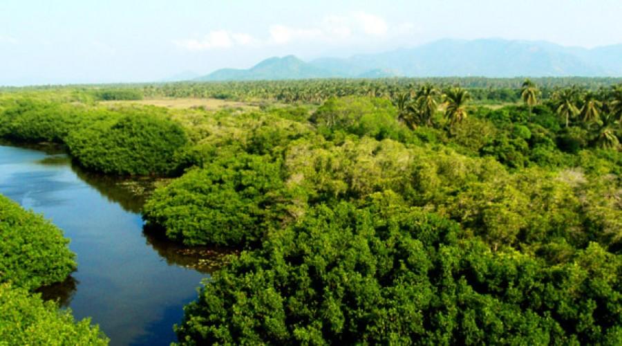 Estero Palo Verde en Colima