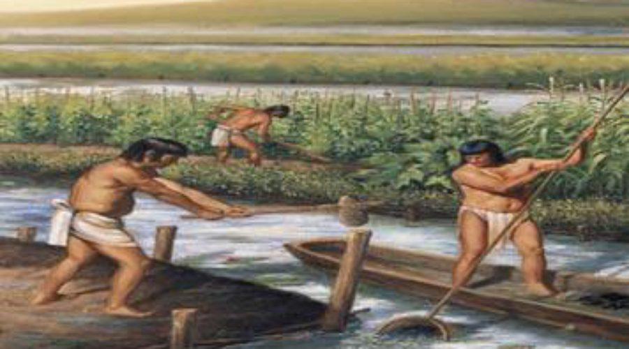 La Agricultura para los Mayas