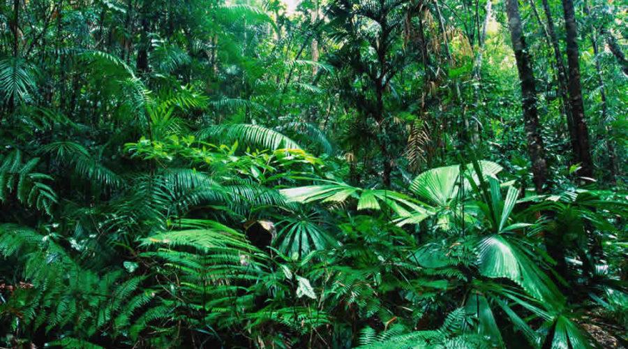 Ecosistemas y Fauna Mexicana