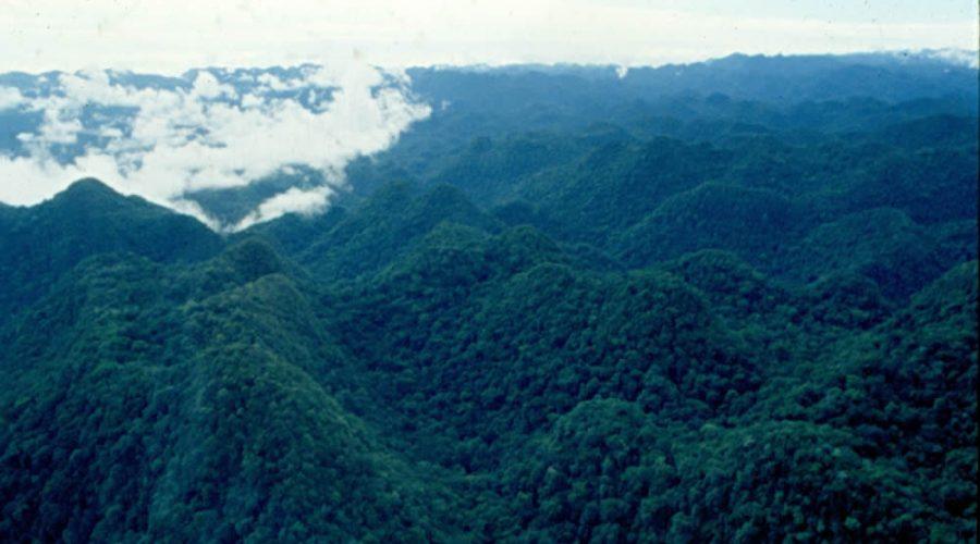 Selva del Ocote