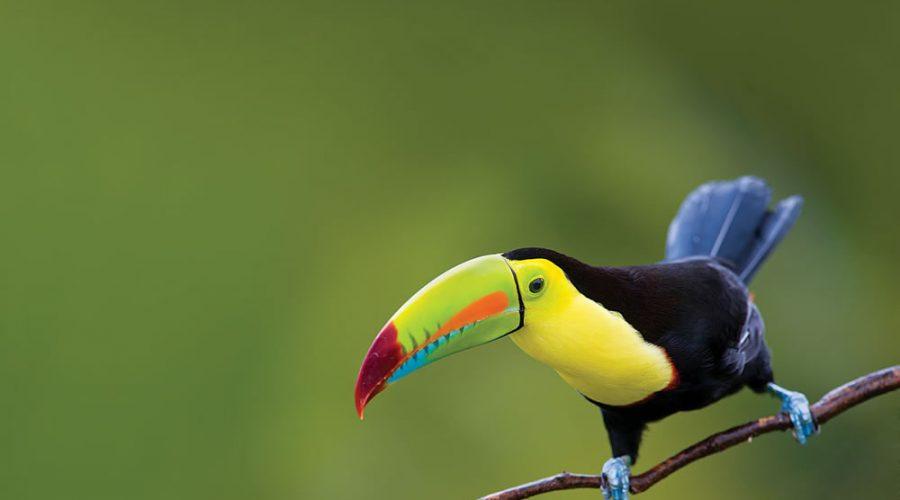 Biodiversidad en la Riviera Maya