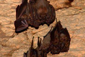 Cueva de Murciélagos en Xcaret