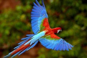 Flora y Fauna en Xcaret