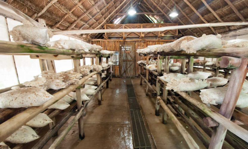 Granja de Hongos en Xcaret