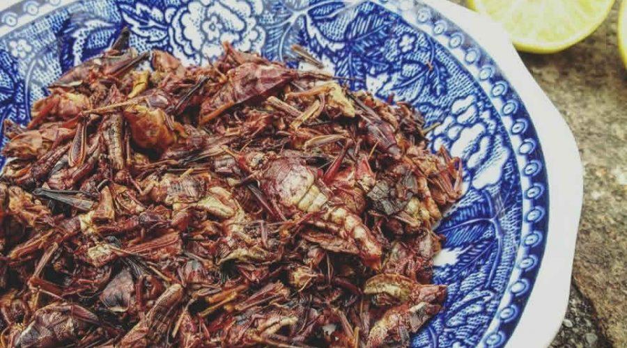 Insectos Mexicanos: un Manjar Nutritivo