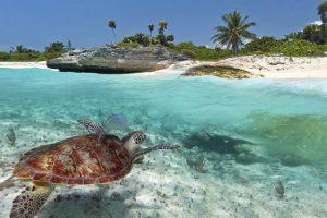 Riviera Maya: Costa Maravillosa