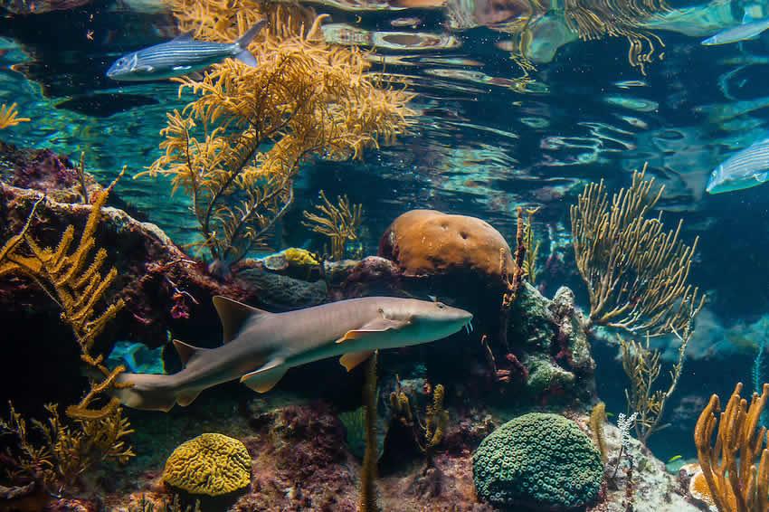 acuario de arrecife de coral en xcaret turimexico