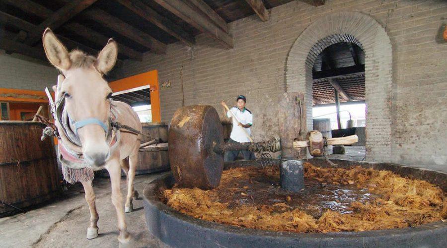 Fábricas de Mezcal en Teotitlán del Valle, Oaxaca