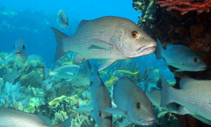 Granjas de peces y de camarones en xcaret turimexico for Granja de peces ornamentales