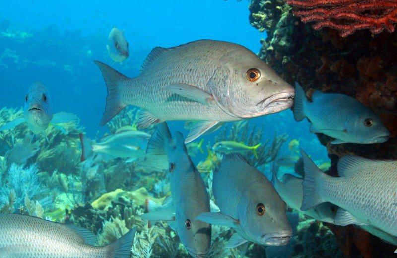Granjas de peces y de camarones en xcaret turimexico for Granja de peces