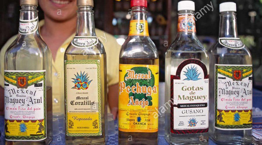 Palenque Global Maguey Azul en Oaxaca