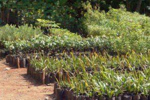 Trasplante de Árboles y Composta en Xcaret