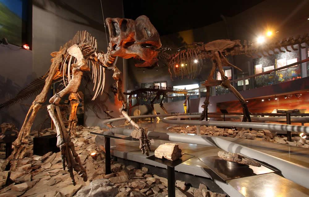 Museo del Desierto en Coahuila