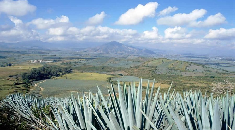 El Paisaje Agavero en el Centro de Oaxaca