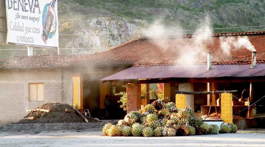 Palenque Rancho Zapata, Oaxaca