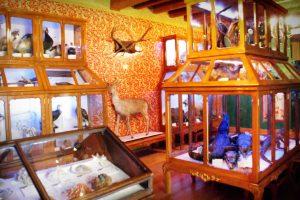 Museo de Historia Natural Alfredo Dugés en Guanajuato