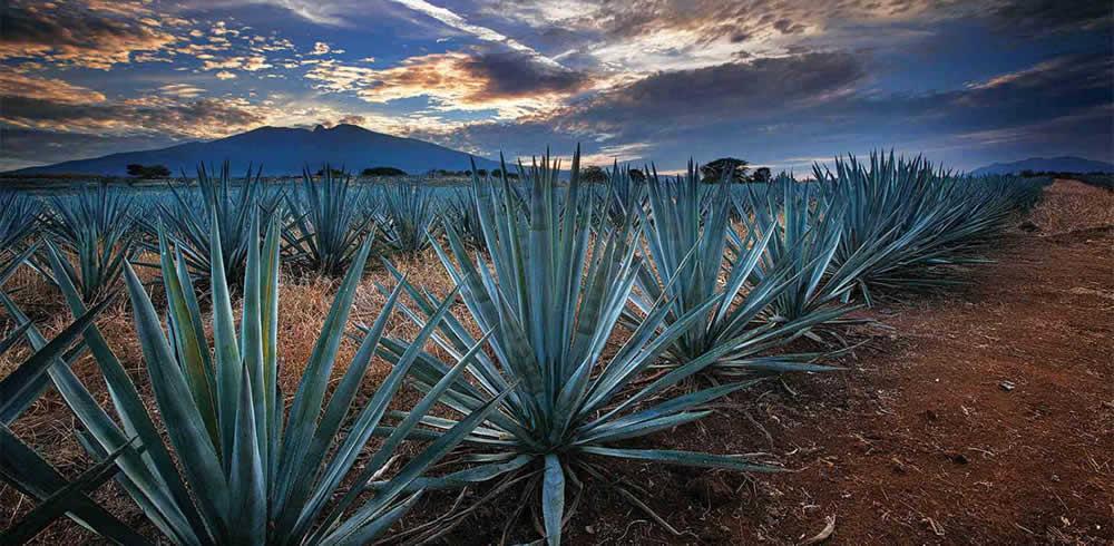 Recorriendo Tequila en Jalisco