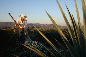Recorriendo la Ruta del Tequila