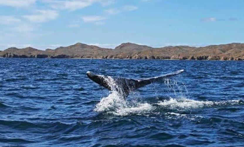 Bahía Magdalena en Baja California Sur