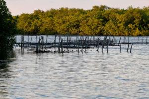 Boca de Camichín en Nayarit