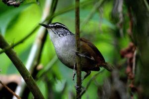 Observación de Aves en Colima