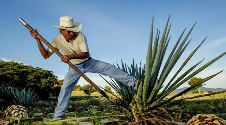 La Ruta del Mezcal en Oaxaca