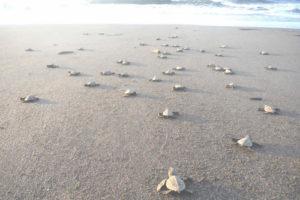 Playa Tortuguero en Veracruz